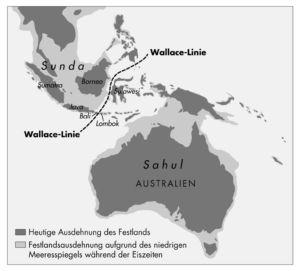 Australien (Wallace Linie)