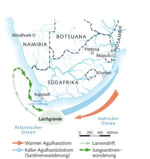 Sardinenlaichgründe vor Südafrika