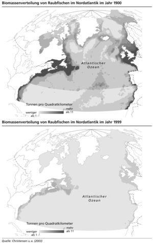 Raubfische im Nordatlantik 1900 bis 1999