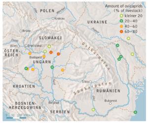 Ungarn und Rumänien Viehbestand